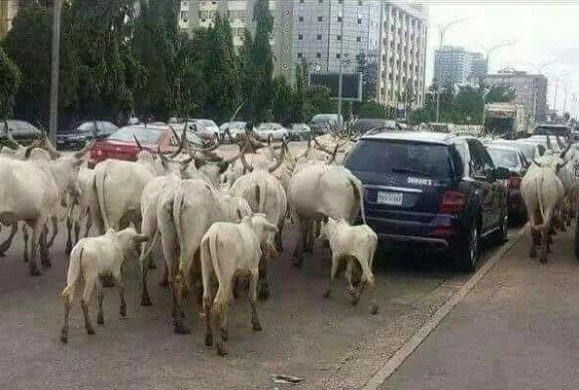 Herdsmen imbroglio: Urgent need for a legislature By Muhammad Ajah